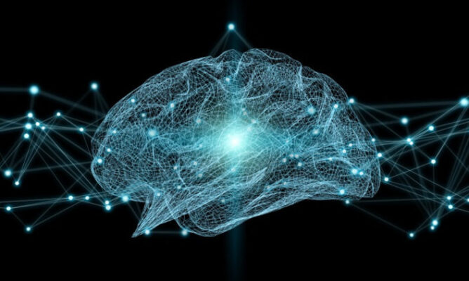 Your neural Language Pathway is 25 million years old