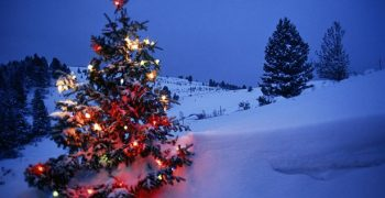 The Strange History of the Christmas Tree