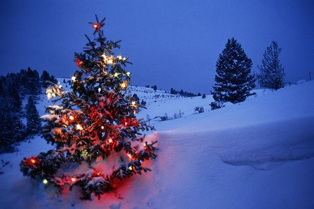 The Strange History of the Christmas Tree